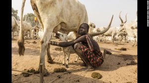 mundari-cows-4-exlarge-